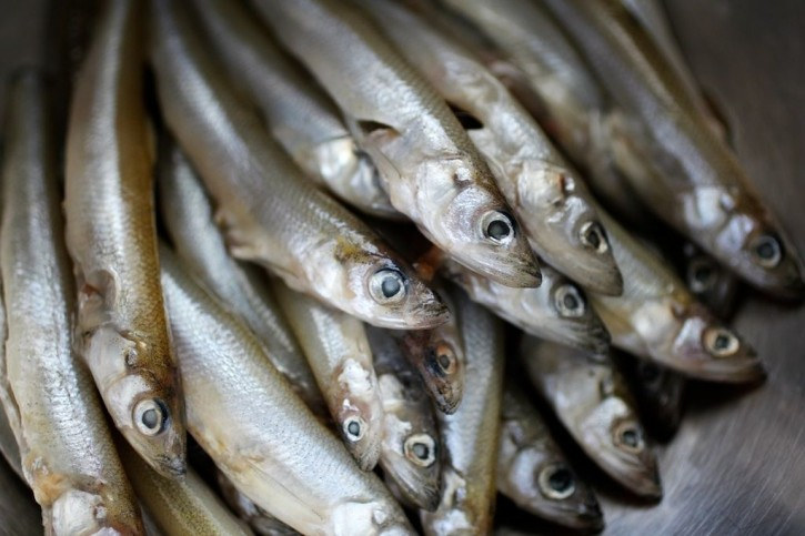 burnt-lumpia-filipino-food-blog-fresh-smelt