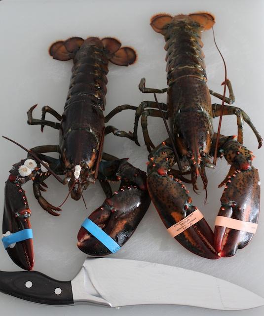 burnt-lumpia-filipino-food-blog-two-lobsters